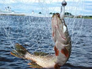 Рыбалка на нижней Волге отель Парус
