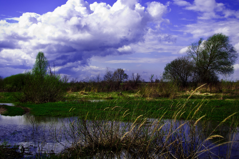 природа в Лысково